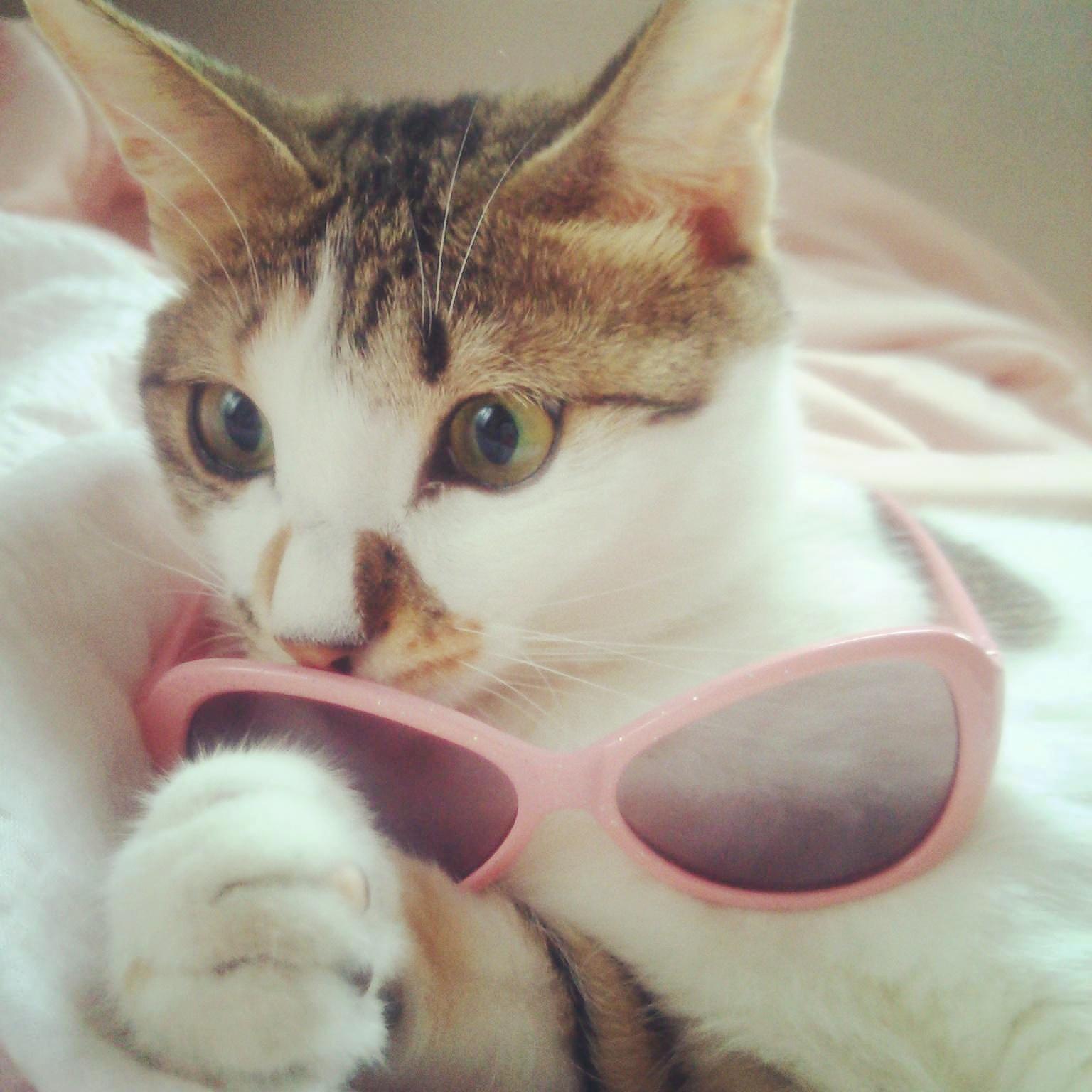 どんなメガネが似合うかな(^^)